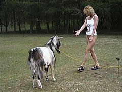 Lisa play with goat
